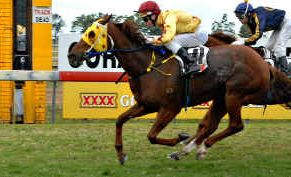 Jockey Paul Hammersley wins the HL Black Memorial Open (1500m) on Sunshine Coast horse Hussonator, ahead of Elastane, at Ooralea yesterday.