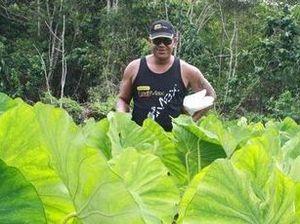 Niue: Land of plenty