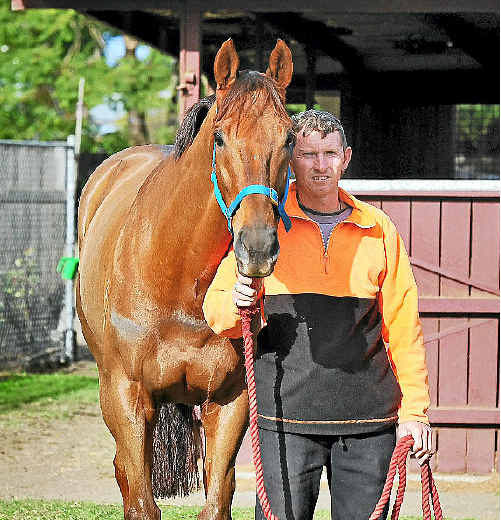 Shelton stable foreman Andrew Cahill with Maclean Cup hopeful Innocenttassie yesterday.