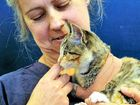 Bashed kitten fighting for life