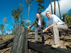 Forests NSW denies logging claims