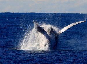 Ocean catch hauls in tourists