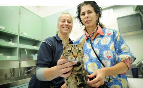 Vet nurse Sandy Bolstad assists veterinarian Olivia Pozzan in micro chipping and desexing tabby cat Mitzy in the PAWS van yesterday.