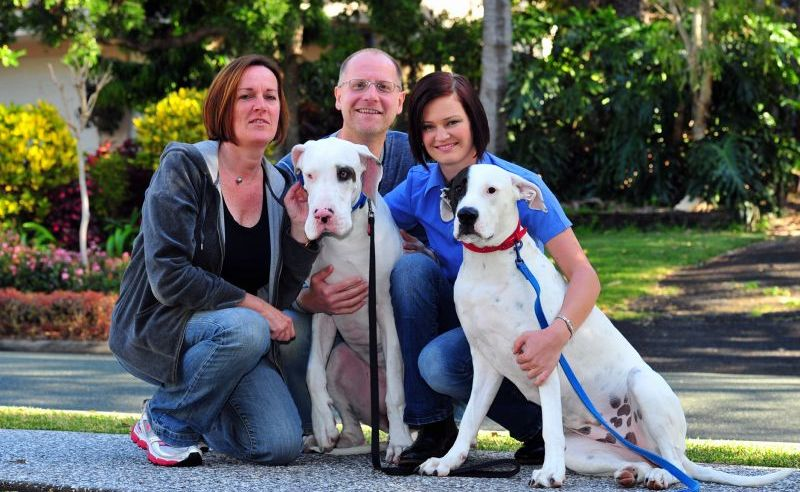 Dog trainer Melissa Bruce, right, with Angela McQuillan and Mike Moore with their great danes Annie, left, and Daisy.