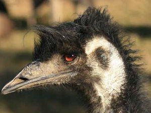 Tab for failed emu tracking project ran to $70,000