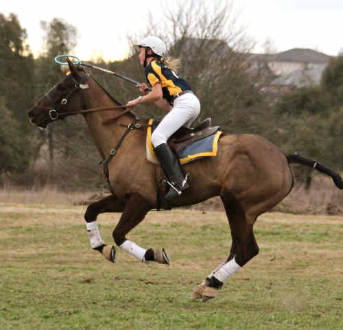 Lindsey Doolan and her horse, Orara River Olympia in action at the NSW Zone Championships.