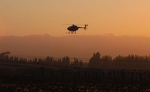 Helicopters fly low over vineyards to push warmer air from the inversion layer down onto the freezing ground, circulating the air.