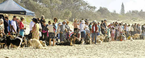 Dog owners protest on the beach.