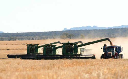 Wheat harvest in progress on Shalimar in the Golden Triangle south of Emerald.