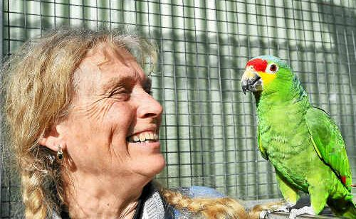 Noddy Connors, of Casuarina Parrot Gardens at Ramornie, shares a moment with her red-lored Amazon parrot ahead of the 10th Aves International Parrot Convention this weekend in Grafton.
