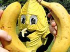 King and Queen Banana to be crowned