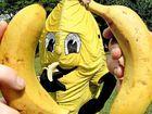Banana Jim with a couple of tasty buddies.