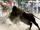 No bull for this rodeo clown