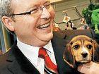 T for triumph in Kevin Rudd's pad