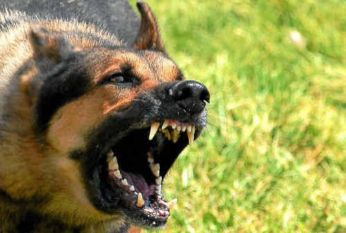 The tribunal upheld the destruction order and the dogs were euthanised.