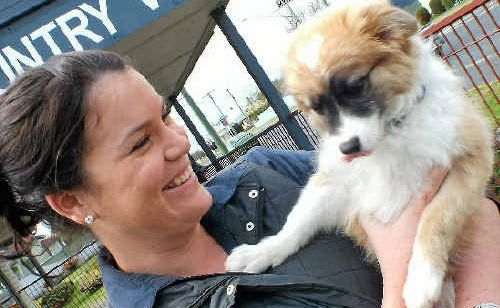 Vet nurse Kath Mauch hopes this lost pup is claimed by his owners.