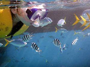 UNESCO will air reef concerns