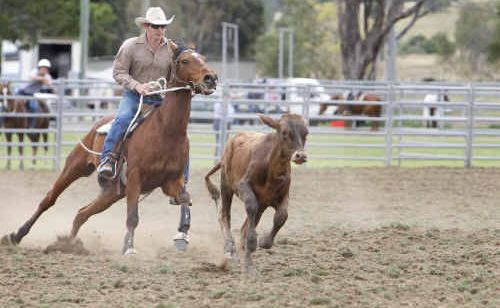 Michael Bowen from Roadvale competing in the campdraft at the Rosewood Festival on Sunday.