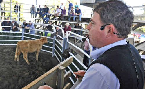 Auctioneer David Farrell believes EU accreditation would open up new markets for Valley cattle producers.