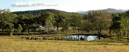 RESCUED: Donkeys are valued at Destiny Boonah.
