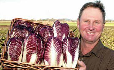 REAL GROWTH INDUSTRY: Treviso radicchio grower Darren Howard of the Lockyer Valley.
