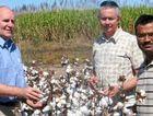 Associate Professor Geoff Cockfield, Dr Neil White and Dr Shahbaz Mushtaq inspect a cotton crop in the Burdekin Irrigation Area.