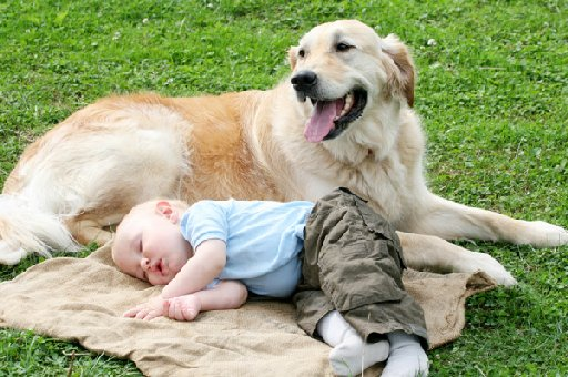Prepare your dog for the new arrival of a baby to ensure both the dog and the baby are safe.