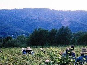 Grasse: Perfumed garden