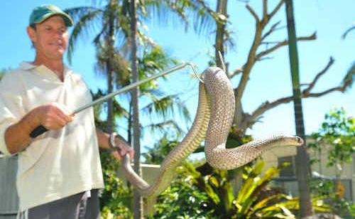 Steve McEwan with eastern brown snake John.