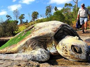 Boat blamed for sea turtle deaths