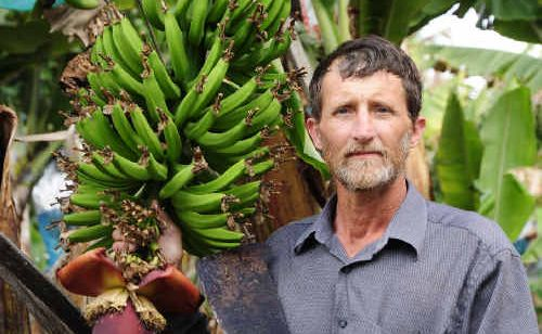 Banana grower David Pike inspects an emerging bunch on his Coffs Harbour plantation.