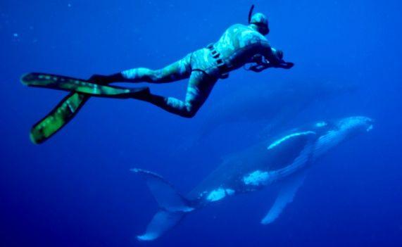 Brett Vercoe of the Solitary Islands Marine Park Authority studies a humpback and calf.