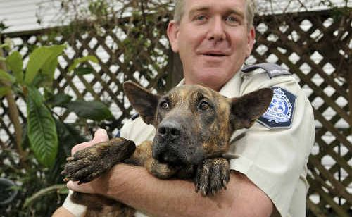 Darling Downs RSPCA inspector Shawn Jansen looks after two-year-old kelpie-cross Kellie. There are many animals like Kellie still looking for a loving home.