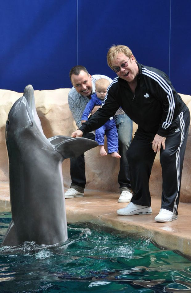 Elton, David and Zachary meet a friendly dolphin.