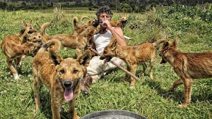 John Cooper on his Nymboida property with his dingo clan.
