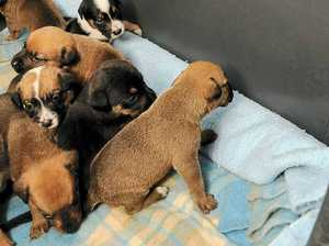 Dumped puppies shock shelter
