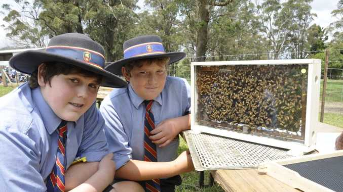 BUZZING AROUND: Gene Clarke and Brock Parton from Downlands College get up close to some bees at the Queensland Beekeeper's Association site.