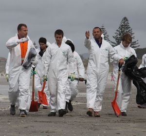 Teams of volunteers head out to clear oil on Tauranga's beaches.