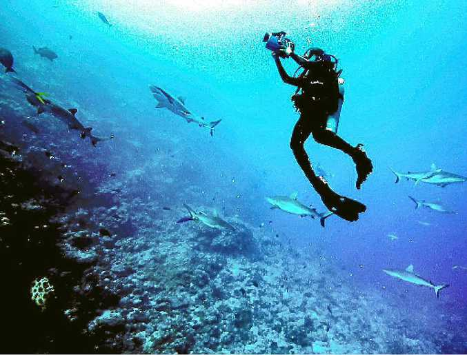Madi Stewart photographing sharks in the Caribbean.