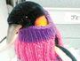 Woolly comfort for penguins