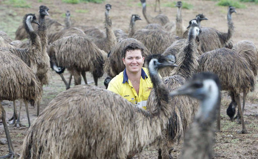 Try It Emu Farm manager Brendon Schmidt with 15-month-old emus that could soon be a tasty part of dinner.
