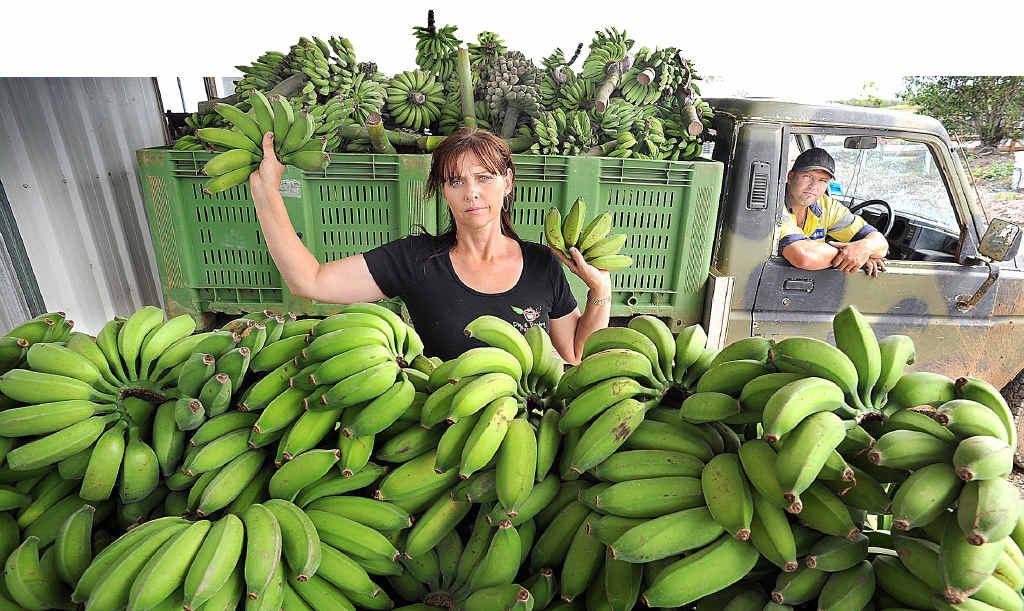Courageous banana farmer Bonita Doyle and Clinton Colgan prepare for the salvage sale after storms shredded the Nikenbah plantation.