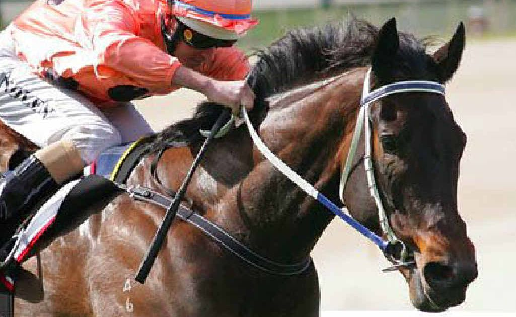The Wonder from Down Under: Black Caviar.