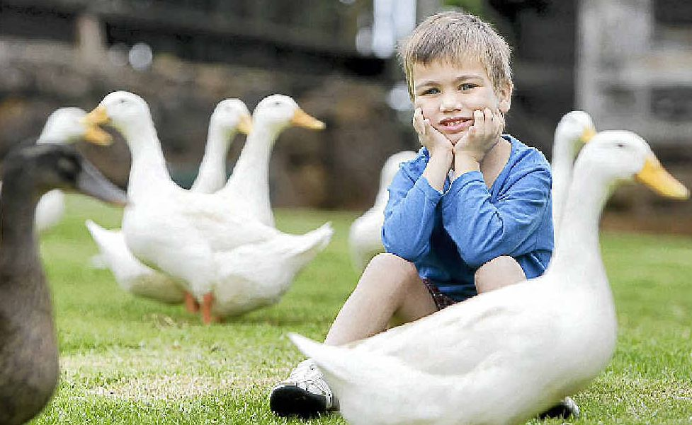 Five-year-old Angus Bowles enjoys a holiday with his family at Solothurn Rural Resort at Maleny.