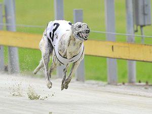 Queen a cut above Qld dogs speedy