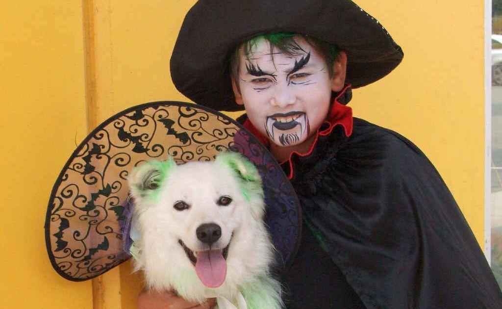 Ezra Starr, 12, of Bli Bli, with Jasmine the samoyd labrador dressed in Halloween costumes.