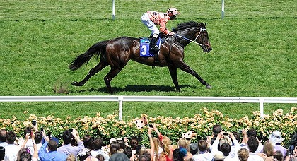 Black Caviar's (pic) half-sister was sold for $2.6 million.