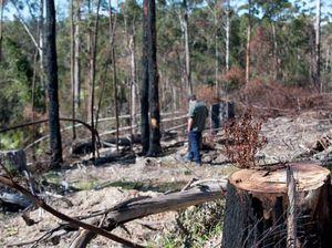 Call made to halt Boambee logging