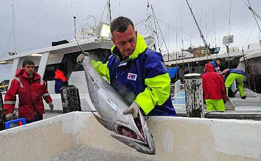 The latest research on fish stocks in Commonwealth waters is increasingly positive, yet there are continued concerns blue fin tuna may be 'overfished'.