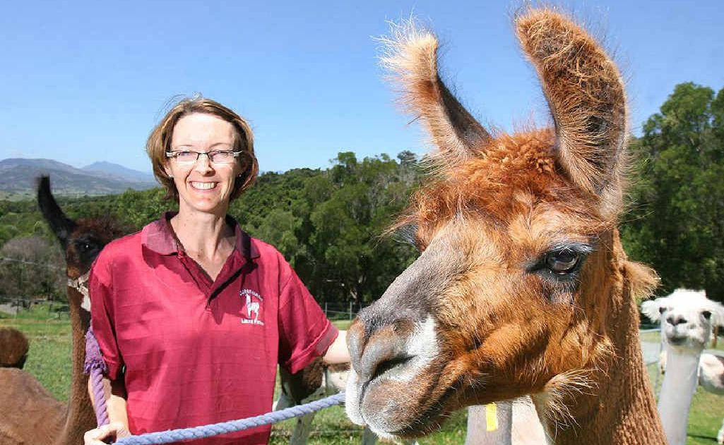 Suzanne Kallenbach and her llamas will be taking part in the Llama Farmer Open Day this weekend.
